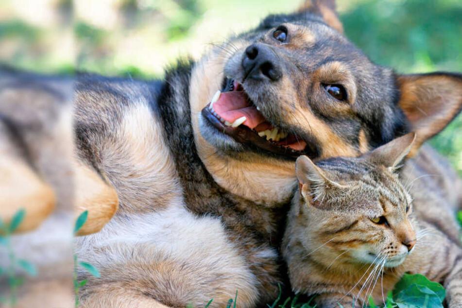 Hunde und Katzen in Gefahr! Dieser tödliche Virus wurde in Hessen nachgewiesen