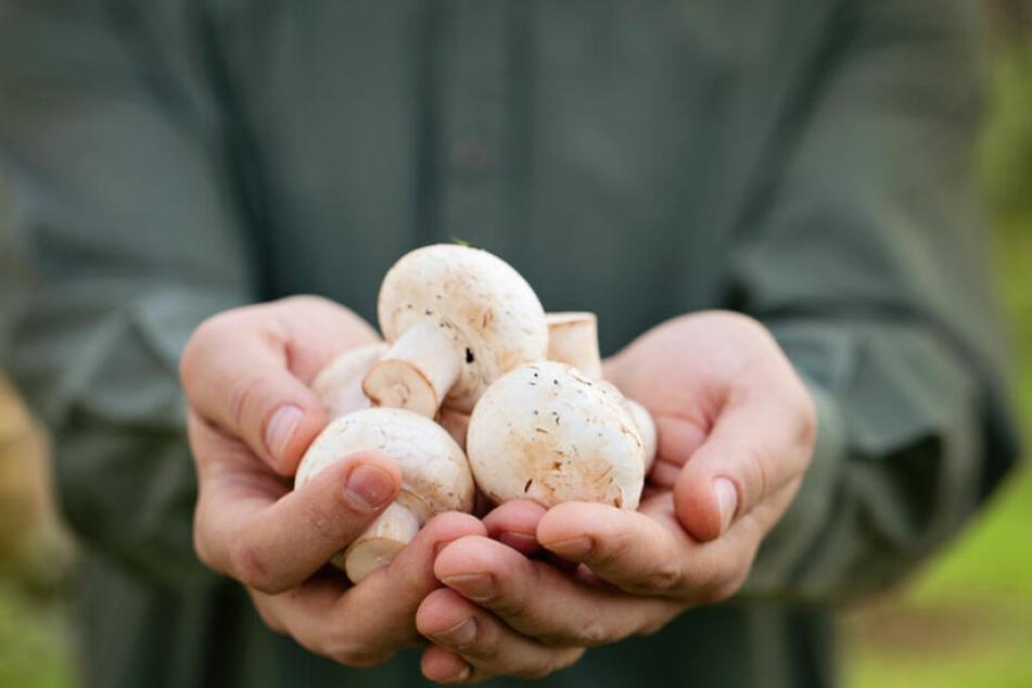 Pilze haben einen positiven Effekt auf unser Gedächtnis! (Symbolbild)