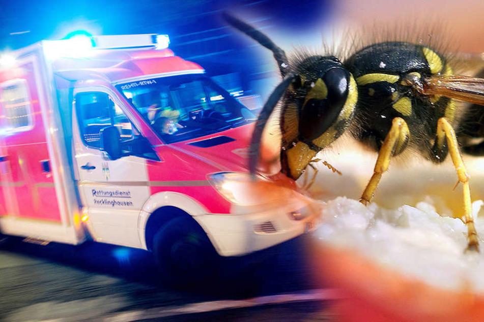 Weil der Fahrer von einer Wespe irritiert wurde, geriet er in den Gegenverkehr.