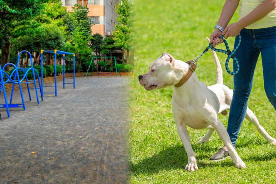 Schock auf dem Schulhof: Hund beißt Kind ins Gesicht!