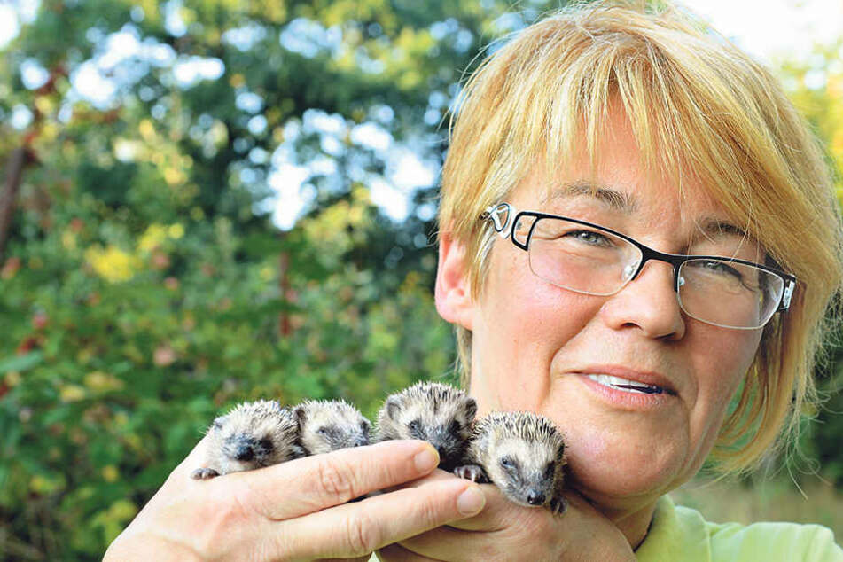 Ein Herz für kleine Stachler: Cornelia Schicke (53) kümmert sich um hilflose Igel.