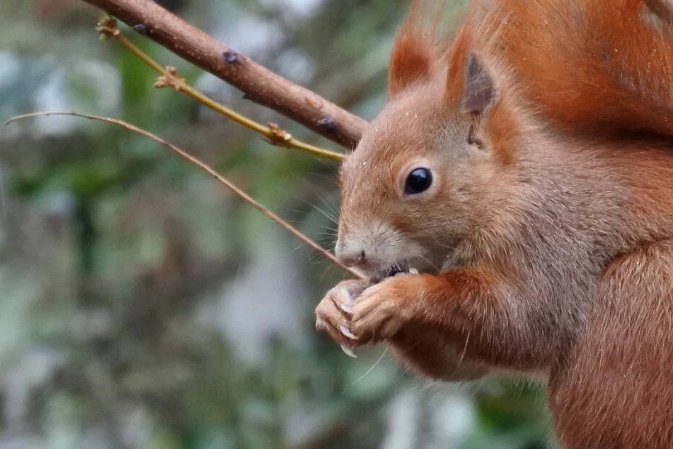 So helft Ihr Eichhörnchen dabei, gut durch den Winter zu kommen