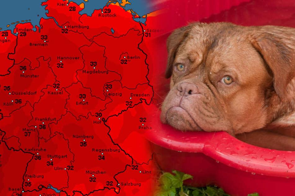 Heiße Hundstage: Heftige Hitzewelle huscht heran!