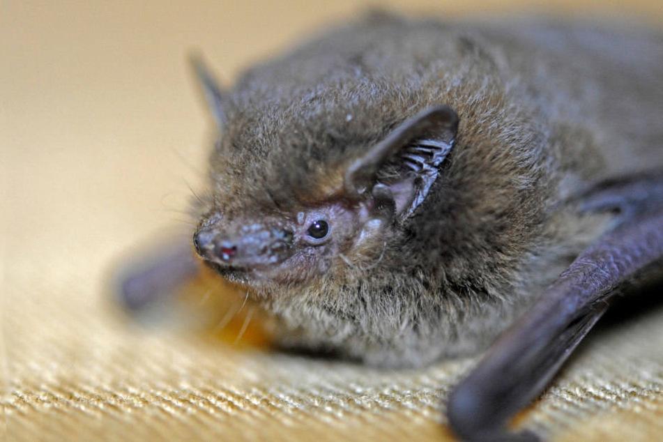 Der Lebensraum der Fledermäuse könnte durch die Bauarbeiten gestört werden. (Symbolbild)