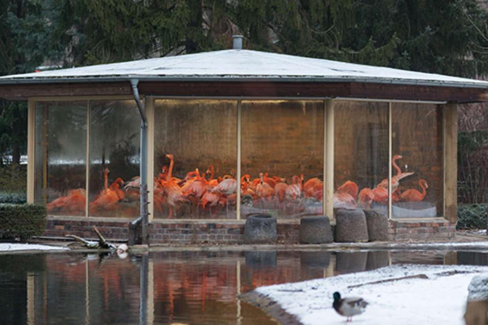 Das Eingesperrtsein stresst nicht nur die Flamingos.