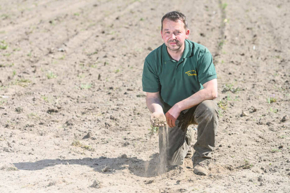 Sachsens Bauern haben Angst! Steht eine neue Trockenperiode bevor?