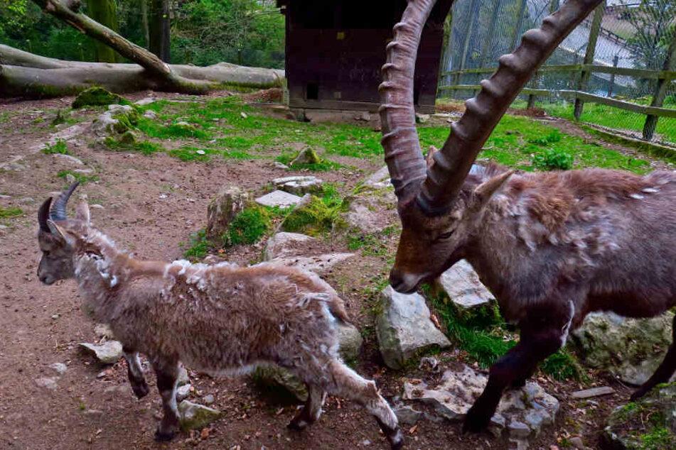 Der Tierpark Olderdissen würde sich über die zusätzliche Fläche sehr freuen.