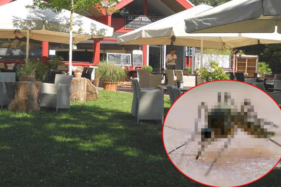 Mücken-Invasion! Restaurant am see kapituliert