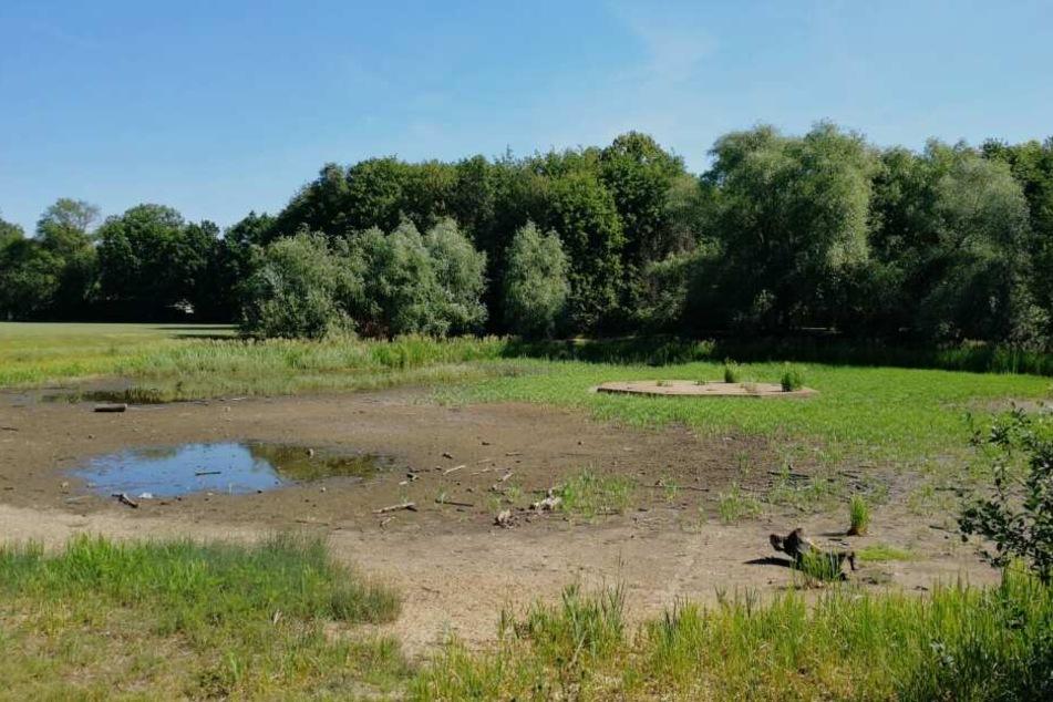 Eine kleine Pfütze befindet sich im Rosentaler Teich. Die Aufnahme ist vier Wochen alt. Mittlerweile ist der Teich staubtrocken.