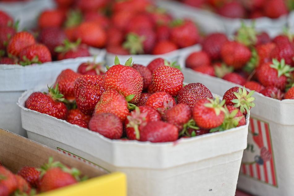 Mhhh! Ab sofort gibt's wieder Erdbeeren direkt vom Feld.
