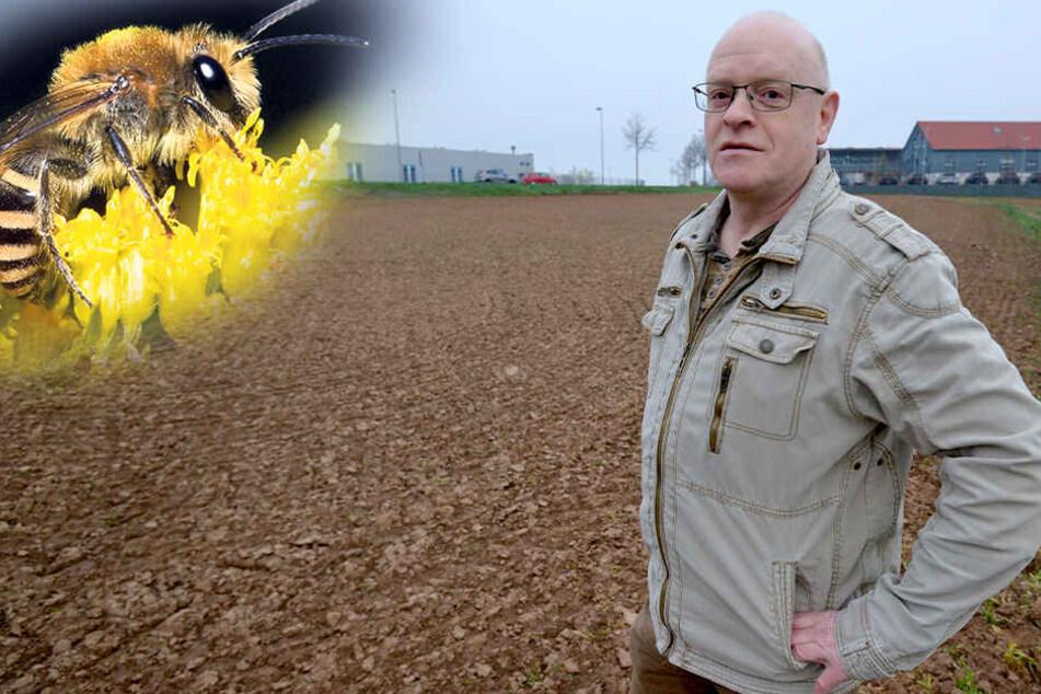 Für Bienen, Schmetterlinge & Co.: Hier entsteht Chemnitz' größte Blumenwiese