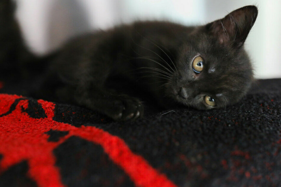 Die Katzen sind etwa sechs Wochen alt.