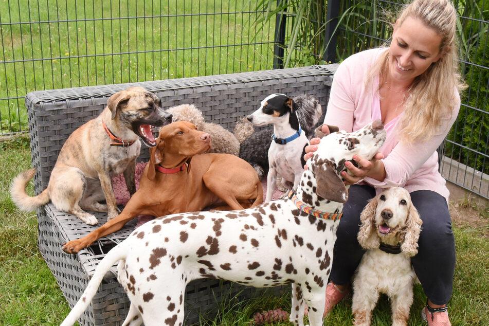 """Im Hundekindergarten betreut sie Gruppen an drei Tagen in der Woche. Die Idee dazu kam, als wegen Corona die """"Urlaubsgäste"""" ausblieben."""