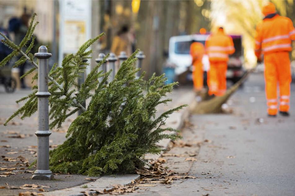 Gestern noch im Wohnzimmer landen die Weihnachtsbäume dieser Tage auf dem Müll.