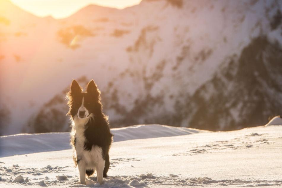 Ein Hund kaperte in Frankreich eine Skipiste. (Symbolbild)