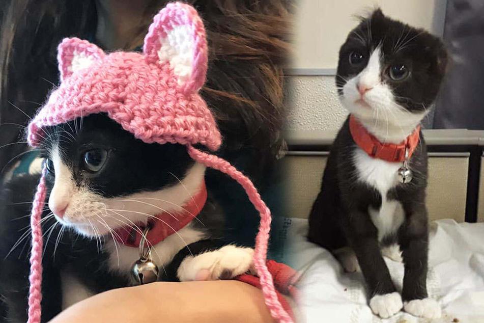 Ohne Ohren wurde die kleine Katze aufgenommen. Die Pflegefamilie kümmerte sich danach rührend um Karma.