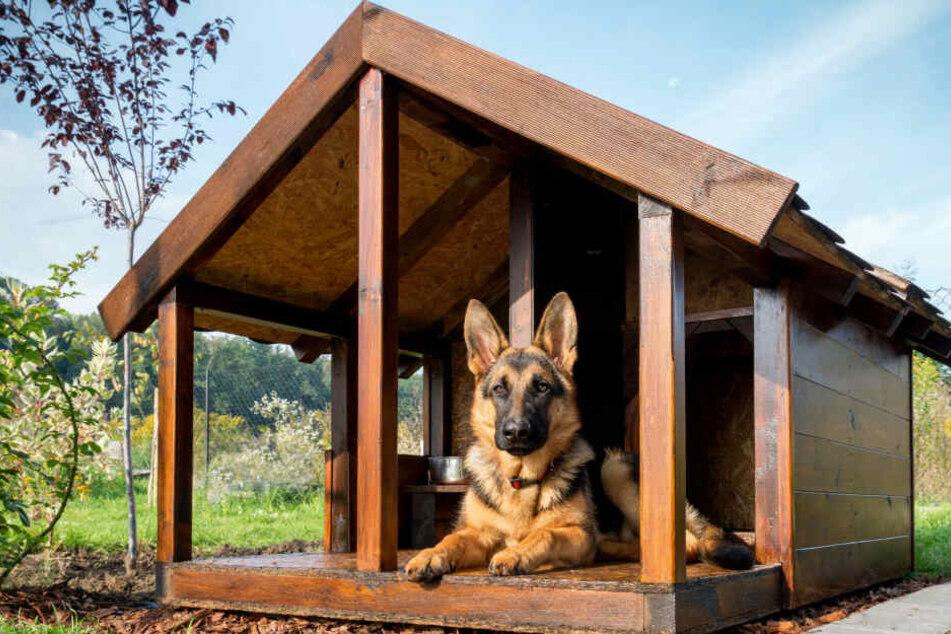 Hunde mit hohem Jagd- und Schutzinstinkt sind für Kinder eher ungeeignet.