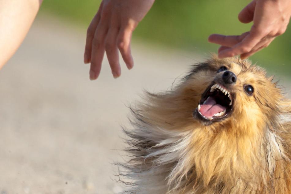 Gesicht, Kopf und Hüfte: Hund verbeißt sich in Kind (4) und verletzt es schwer