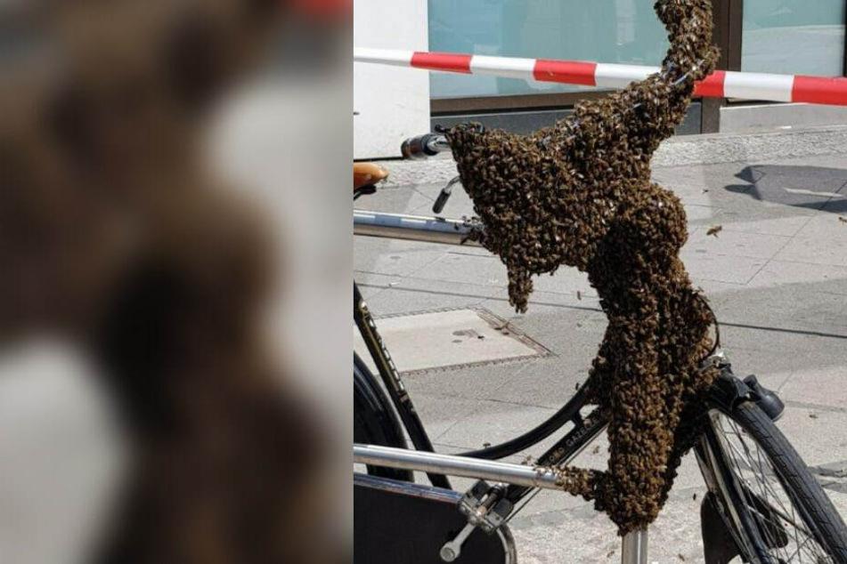 Ein Bienenvolk besiedelte ein Fahrrad in Charlottenburg.