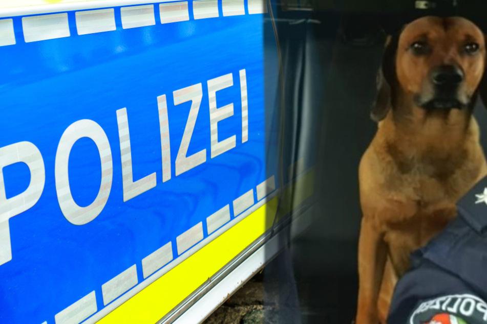 Polizisten jagen entlaufenden Hund, schließlich tricksen sie ihn aus