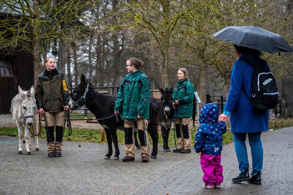 Tierpfleger*innen klären Besucher am Tierpark immer wieder über die Gefahren falscher Fütterung auf.