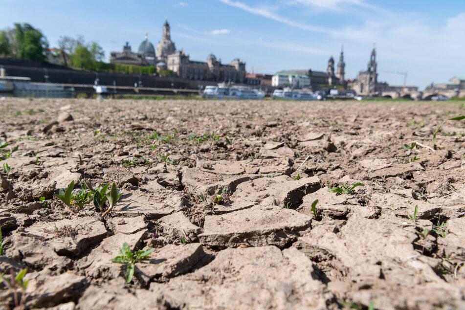 Die vergangenen Jahre waren von Hitzewellen geprägt, wie hier am Elbufer in Dresden am trockenen Boden gut zu erkennen ist.