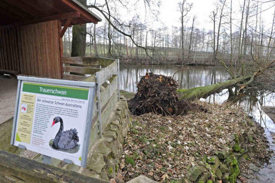 """""""Sabine"""" zerstört Tiergehege: """"Zoo der Minis"""" und Tierpark Hirschfeld verwüstet"""