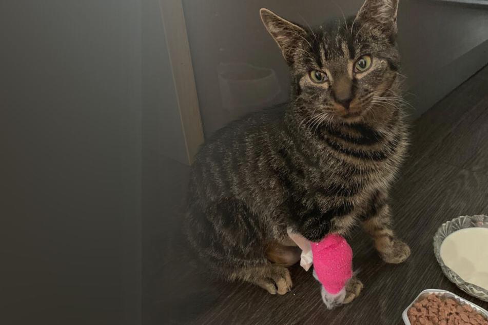 Der fünf Monate alte Kater Kazimir wurde Opfer eines brutalen Tierquälers.