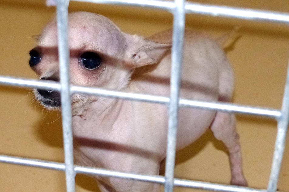 Unfassbar! Mehr als 50 Tiere aus katastrophaler Haltung gerettet