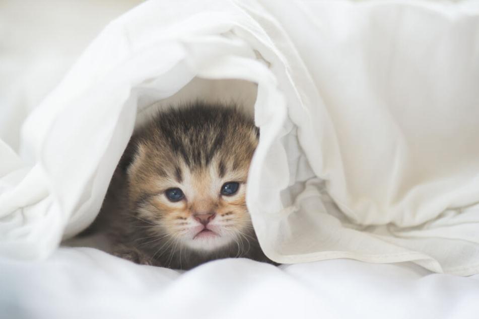 Kleine Katzen haben andere Bedürfnisse und brauchen die Nähe des Menschen noch viel mehr.