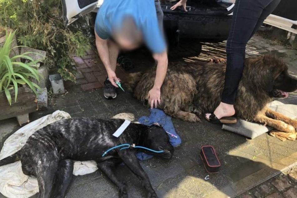 Die Tierrettung leistete vor Ort Erste Hilfe.