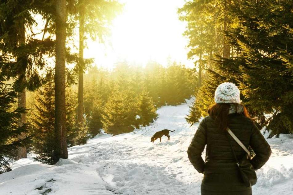 Hunde sollten im Winter stets in Bewegung bleiben, um nicht auszukühlen.