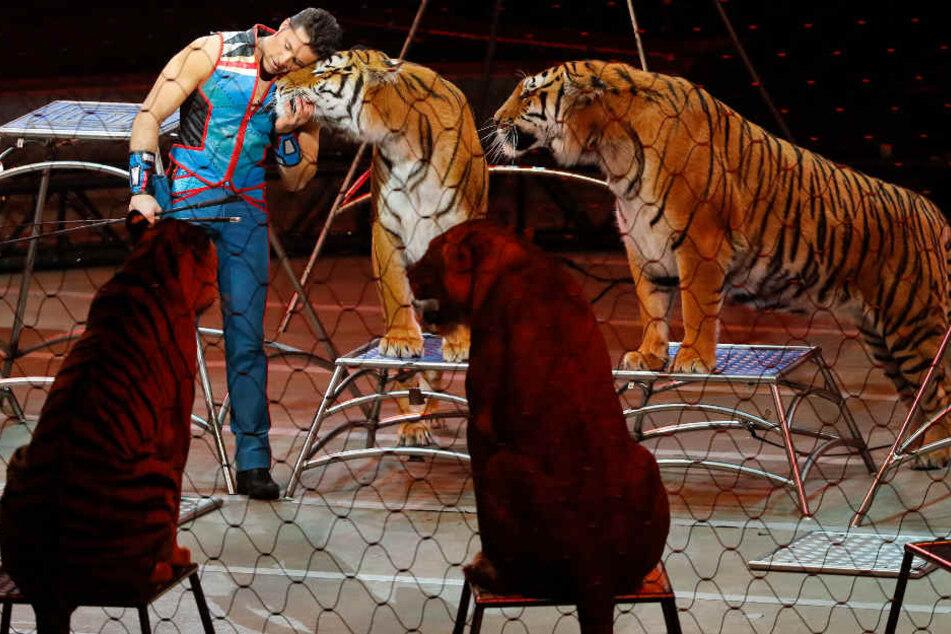 Zirkus Charles Knie kehrt nach Bielefeld zurück und bringt wieder Wildtiere mit