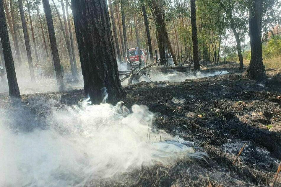Im August brannten in Nordsachsen etwa 20 Hektar Wald.