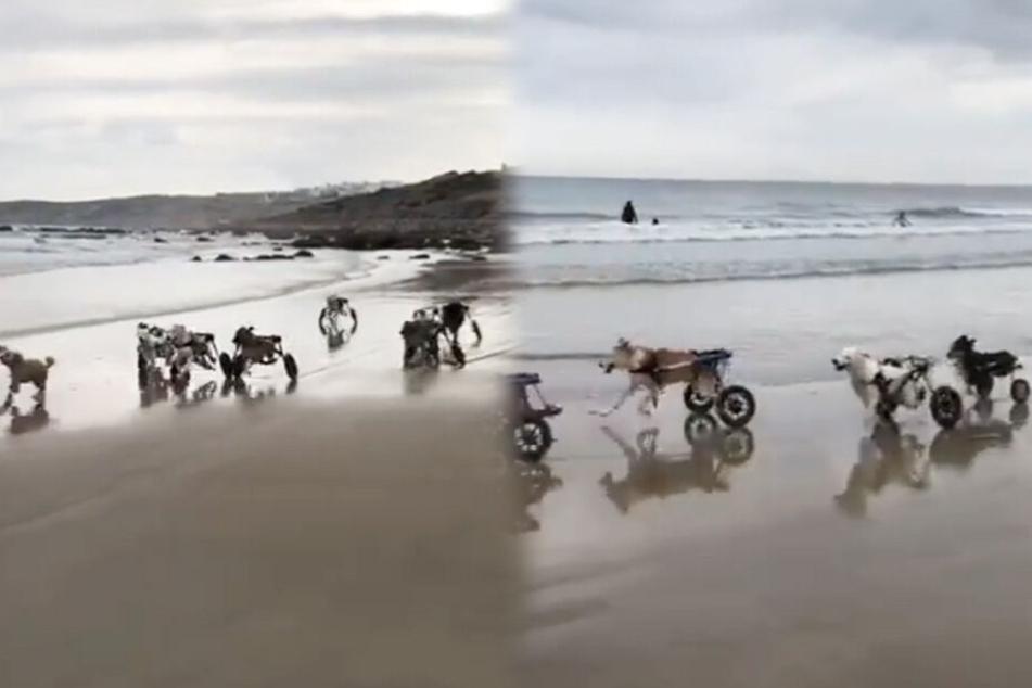 Mehrere Hunde konnten endlich wieder Spaß haben.