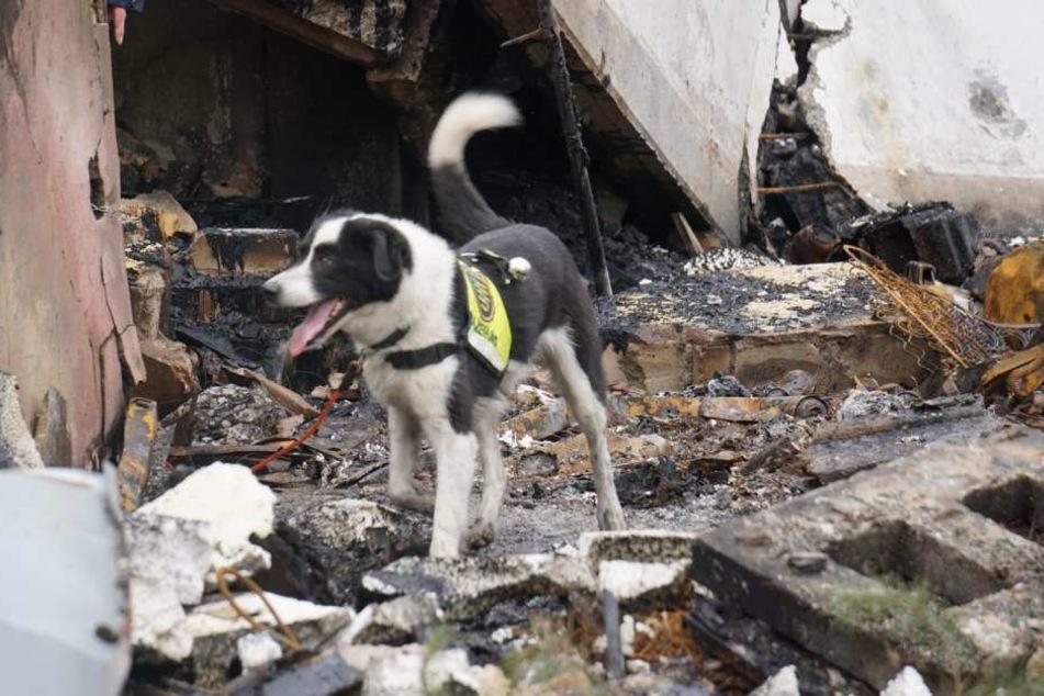Spürhunde fanden bis Montagabend keinen Menschen unter den Trümmern.
