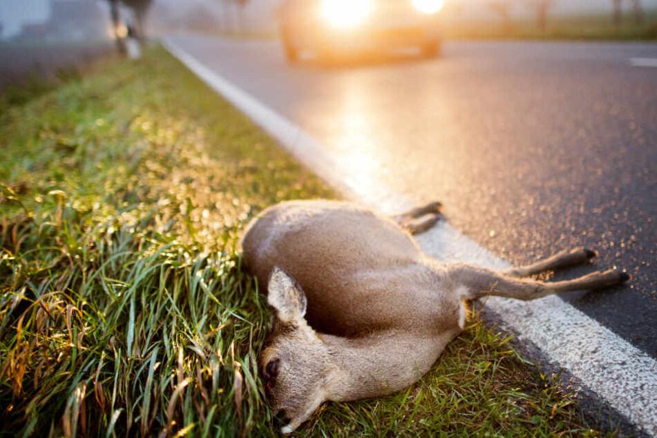 So vermeidet Ihr Wildunfälle mit Rehen und Schweinen