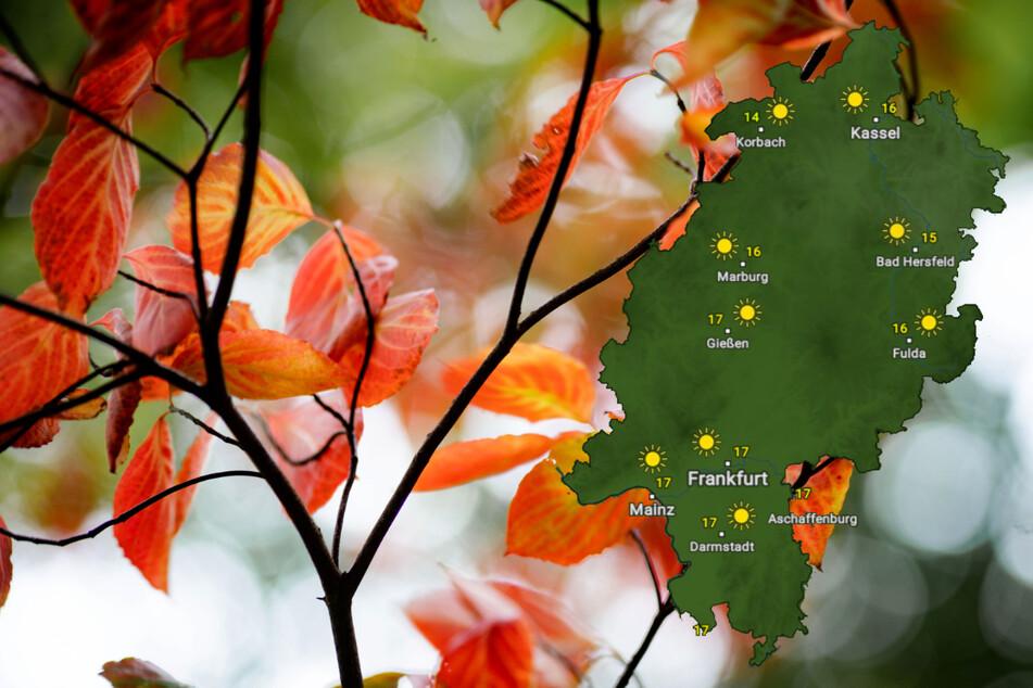 Goldener Herbst in Hessen am Wochenende, nur nachts kann's frostig werden