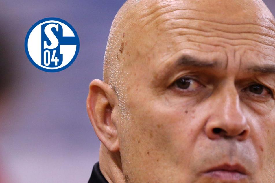 Christian Gross übernimmt bei Schalke 04 und soll die Königsblauen vor dem Abstieg retten