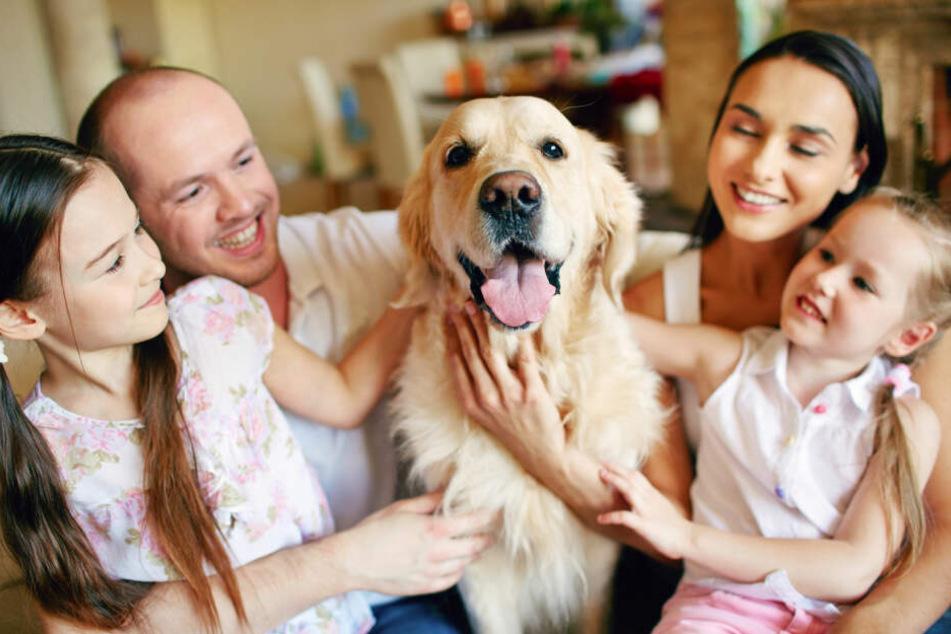 Hunde sind eine Bereicherung für viele Familien.