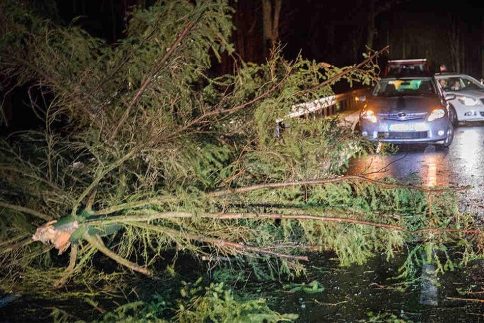 Auf einer Straße zwischen Zwischen Mildenau und Geyersdorf im Erzgebirge knickte durch den Sturm eine Fichte um.