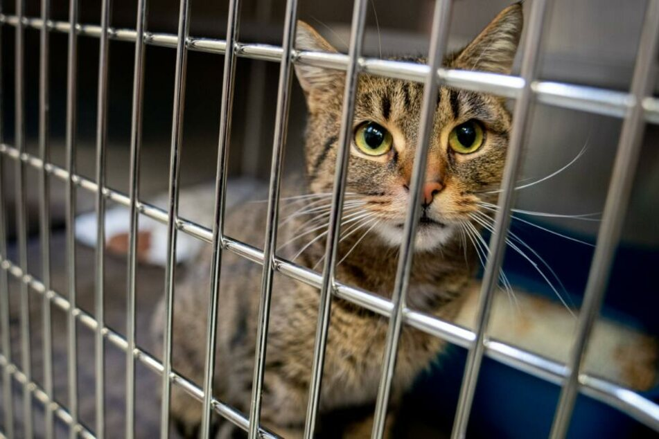 So viele Haustiere wurden in den Sommerferien in Tierheimen abgegeben