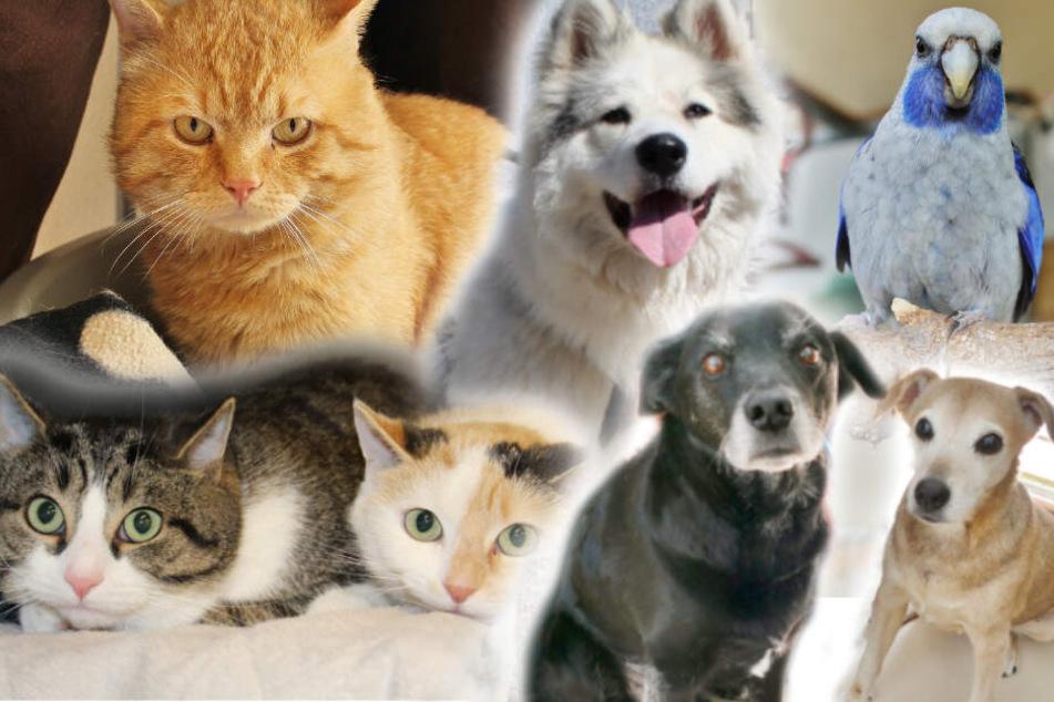 Hunde-Mama und Sohn warten schon über drei Monate: Hast Du ein Herz für diese Tiere?