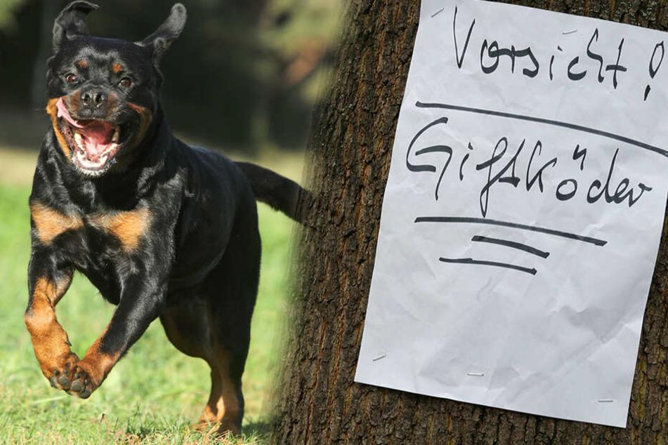 In Thalheim hat ein Rottweiler offenbar Giftköder gefressen. Wenig später verstarb der Hund. (Bildmontage)