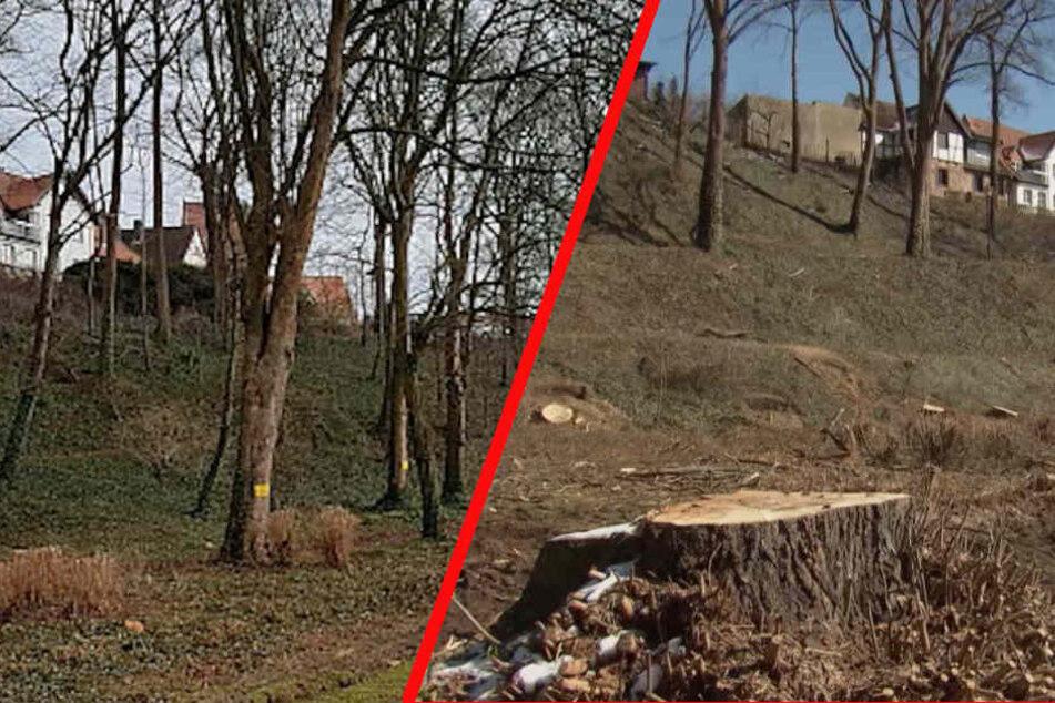 Vor dem Kahlschlag (li.) standen im Vattipark noch viele Bäume. Danach waren 50 Stück weg.