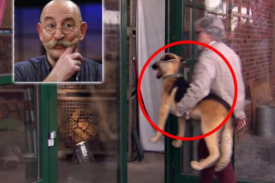 Bares für Rares: Hund in Müll-Container entsorgt! Horst Lichter rettet ihn