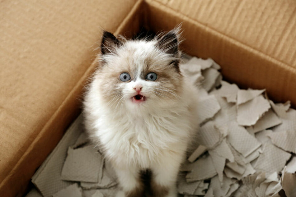 Cats love boxes and crates in all sizes and shapes.