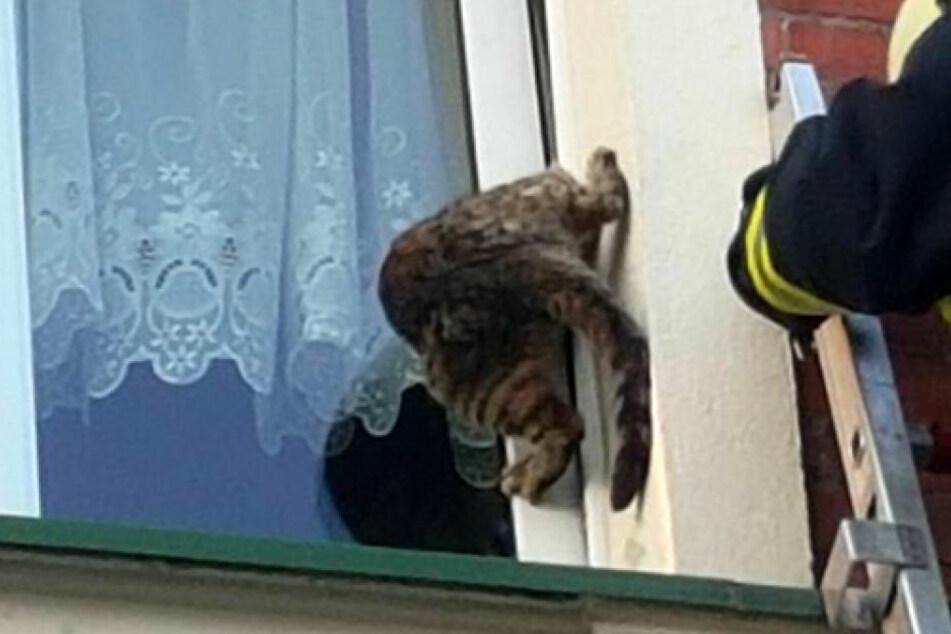 Mit dem Kopf hing die hilflose Katze im Fensterspalt fest.