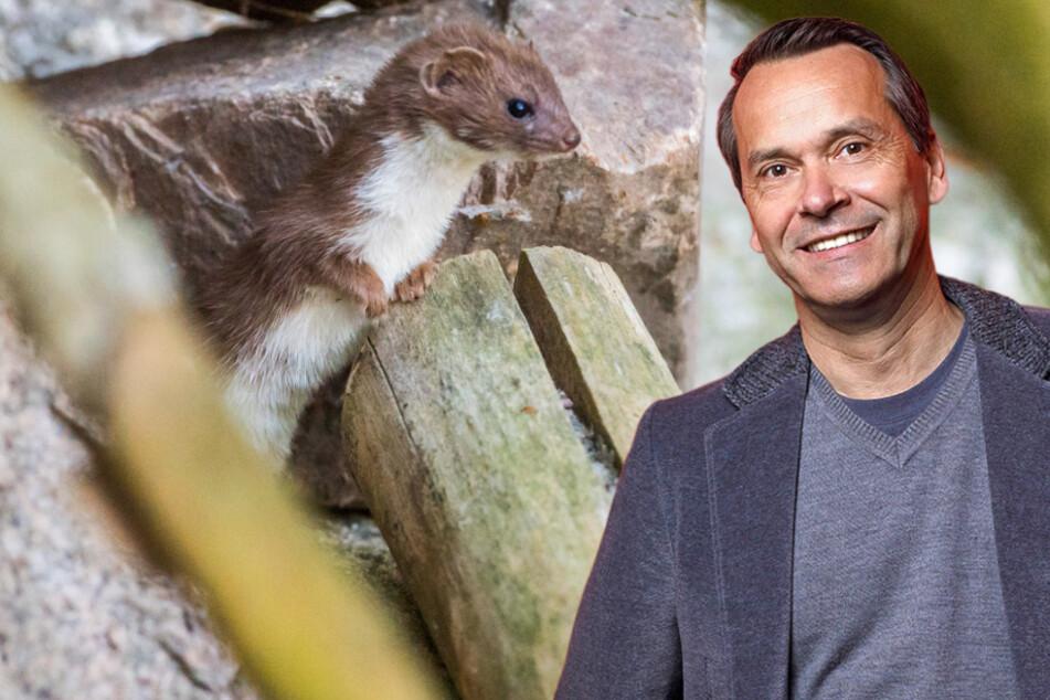 RTL-Wetterfrosch neuer Promi-Pate im Zoo der Minis