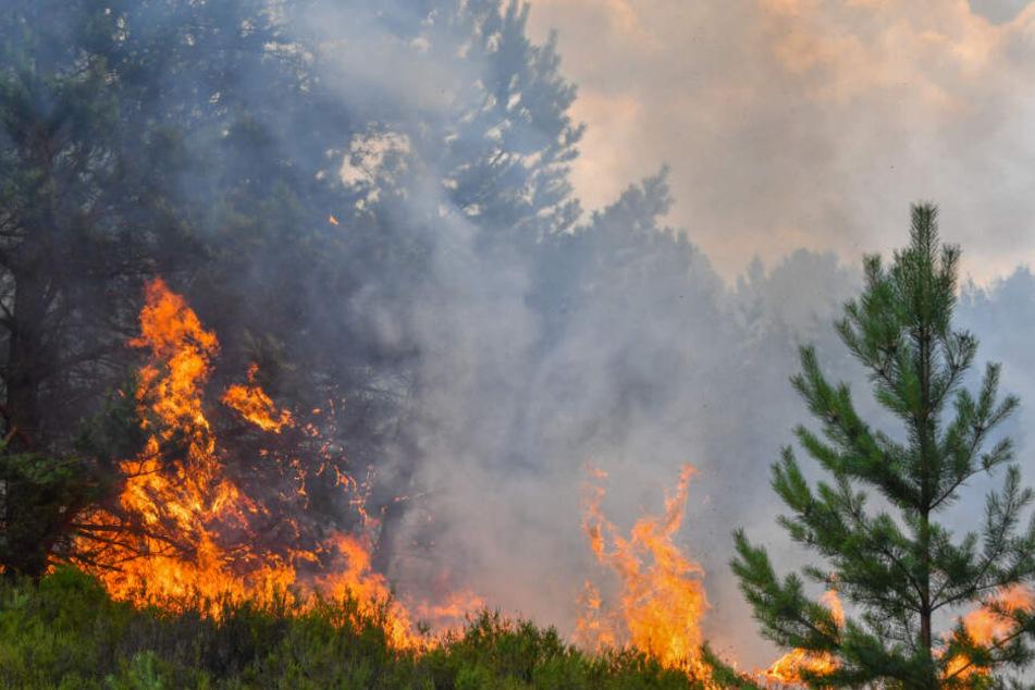 Wald- und Heideflächen brennen auf einem ehemaligen Truppenübungsplatz in Südbrandenburg.(Archivbild)